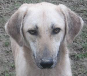 45 chiens à l'abandon dans un sale état à perpignan !!! - Page 2 Chipsy10
