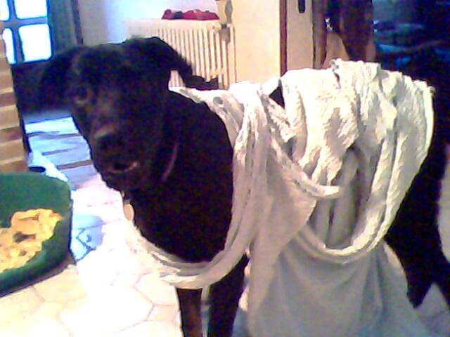 Bétises au jour le jour de nos chiens :-( - Page 2 Img00210