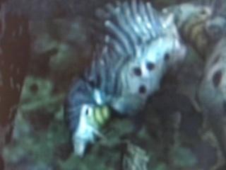 CPNI (Créature Pandorienne Non-Identifiée) Imgp1216