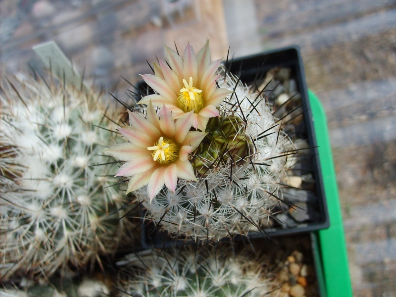 Blütenbilder 2010 Sd532341