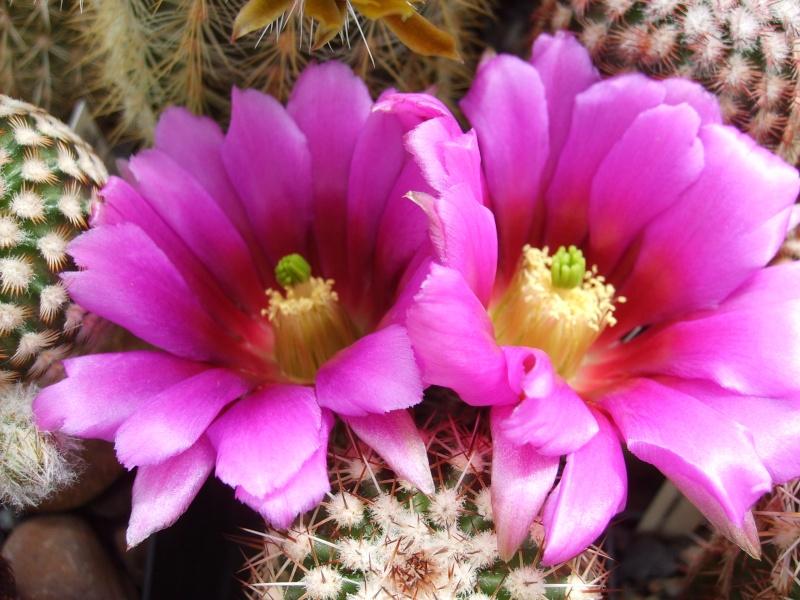 Blütenbilder 2010 - Seite 5 Sd532512