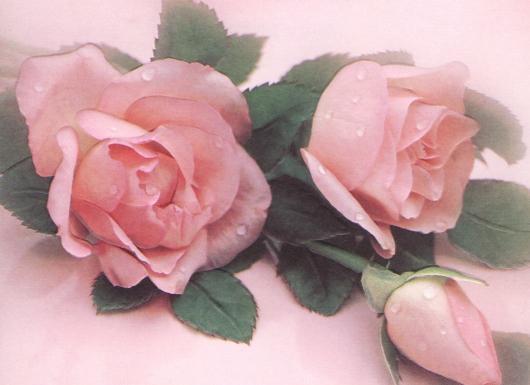 Décès - Page 5 Roses10