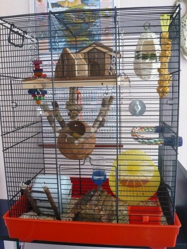 Vos cages : les photos [PAS DE COMMENTAIRES] - Page 3 P1020111
