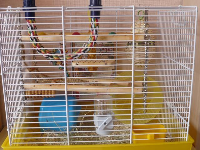 Vos cages : les photos [PAS DE COMMENTAIRES] - Page 3 P1020112