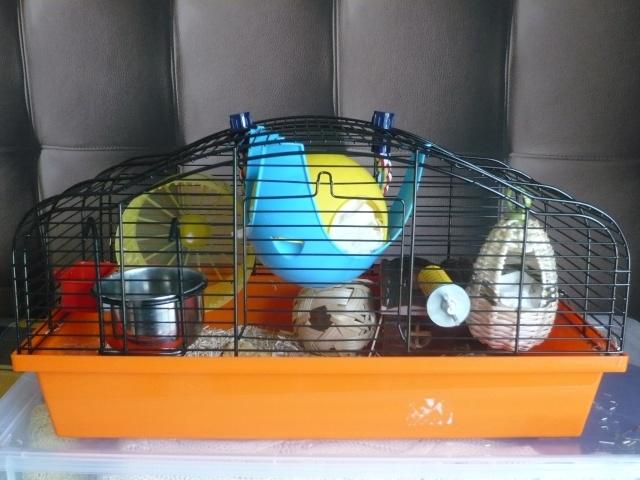 Vos cages : les photos [PAS DE COMMENTAIRES] - Page 3 P1020113