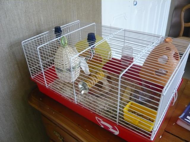 Vos cages : les photos [PAS DE COMMENTAIRES] - Page 3 P1020114