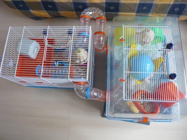 Vos cages : les photos [PAS DE COMMENTAIRES] - Page 3 P1020115