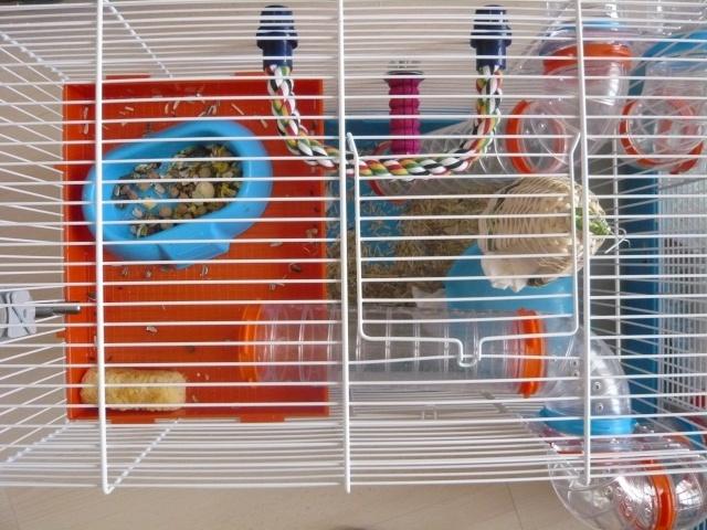 Vos cages : les photos [PAS DE COMMENTAIRES] - Page 3 P1020326