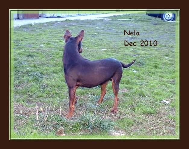 Pimpi et Nela - croisés pinschers de 2 ans - adoptable(s) Suisse, France Nela_310