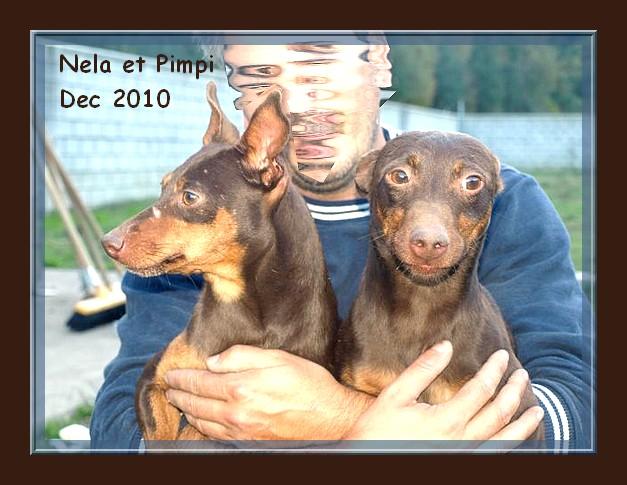 Pimpi et Nela - croisés pinschers de 2 ans - adoptable(s) Suisse, France Nela_e10