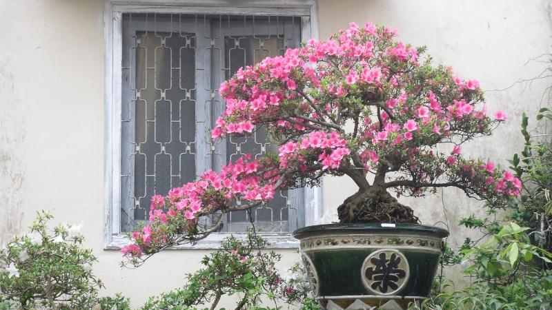 Dalat Vietnam - My Bonsai works Sdc11210