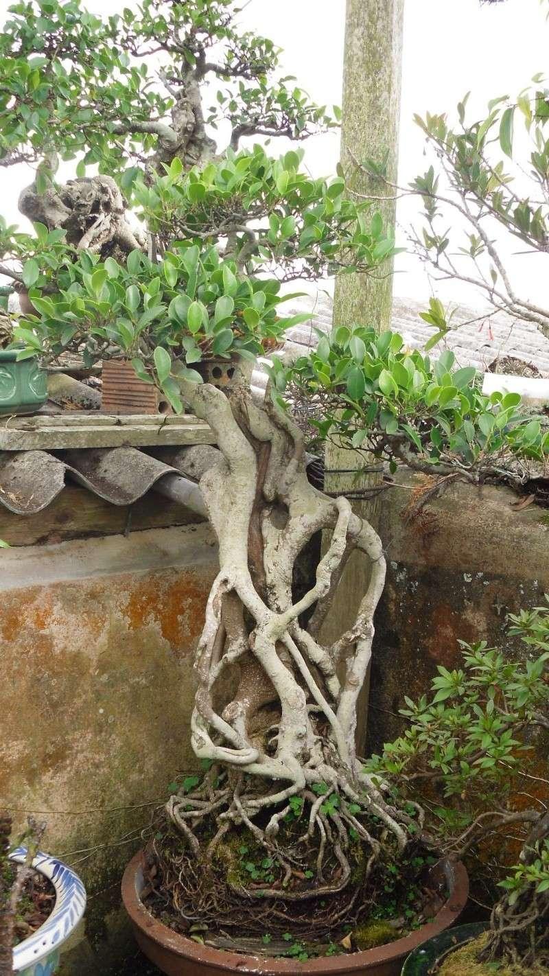 Dalat Vietnam - My Bonsai works Sdc11211