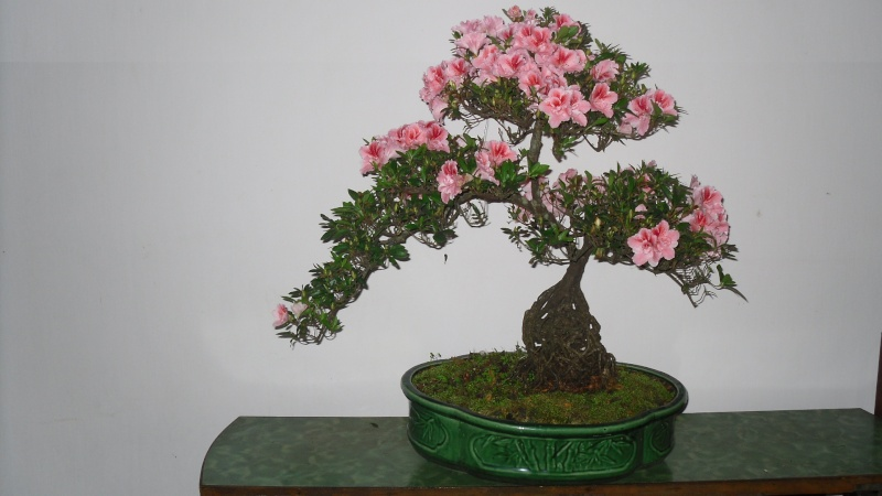 Dalat Vietnam - My Bonsai works Sdc11711
