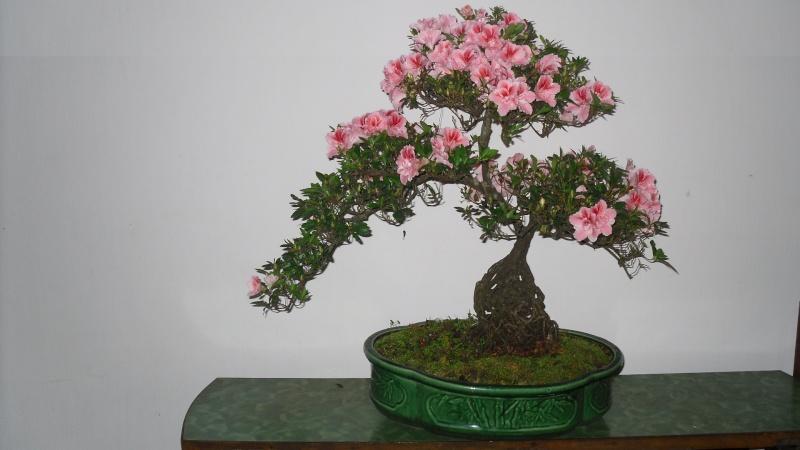 Dalat Vietnam - My Bonsai works Sdc11711