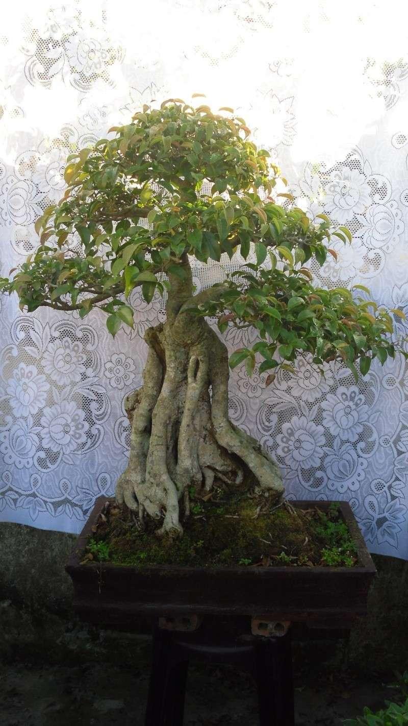 Dalat Vietnam - My Bonsai works Sdc11810