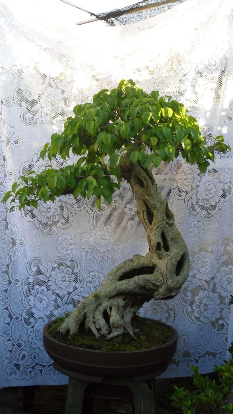 Dalat Vietnam - My Bonsai works Sdc11811