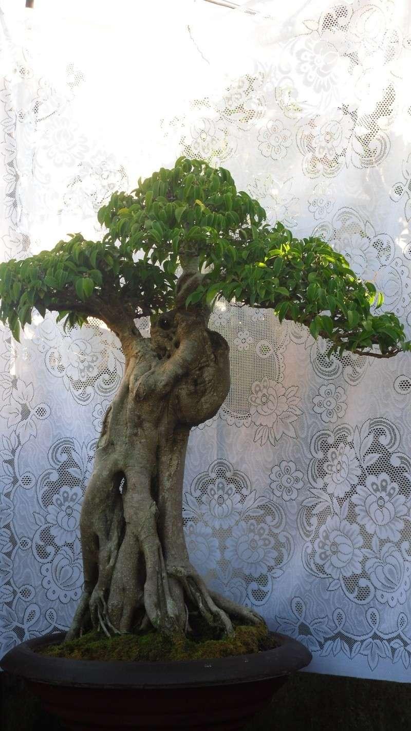 Dalat Vietnam - My Bonsai works Sdc11812