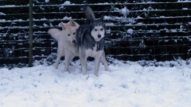 Testez vos connaissances sur les comportements et attitudes des chiens - Page 3 P1080516
