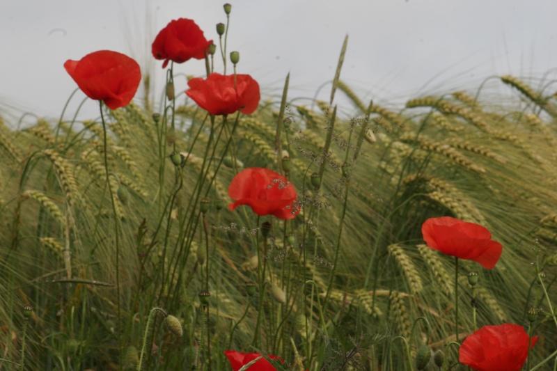 Les Fleurs _mg_3710