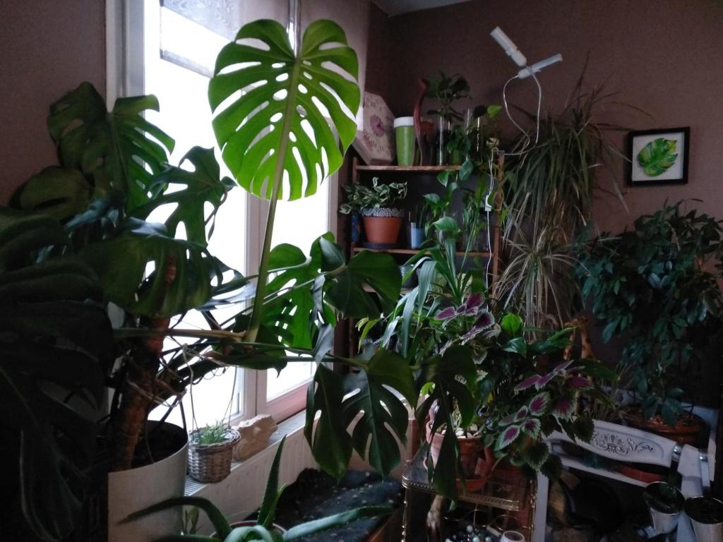 Plantes d'intérieur ou d'extérieur Plante11