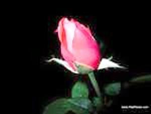 Молодость и красота - Страница 8 09823410
