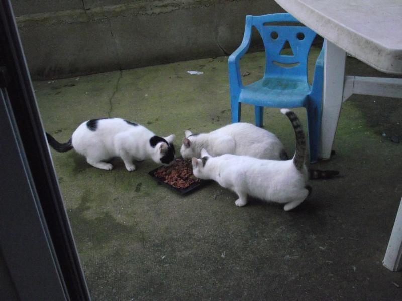 33 chats canardés, seulement 4 survivants, qui les sauvera ? Dscf0211