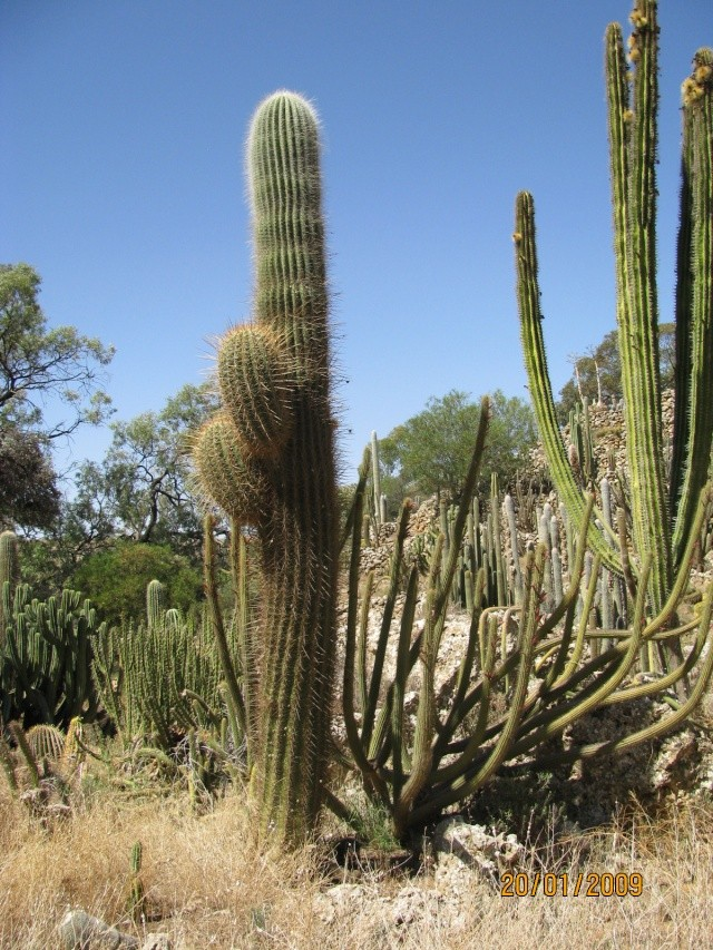 Outdoor cactus garden in riverland Terryl12