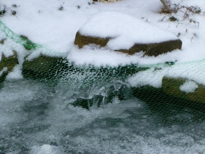 petites photos ce jour de neige et de GRAND FROID !!!!!! P1000713