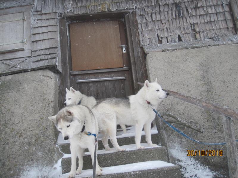 Saskia, Jiro, et leurs copains - Page 4 1010