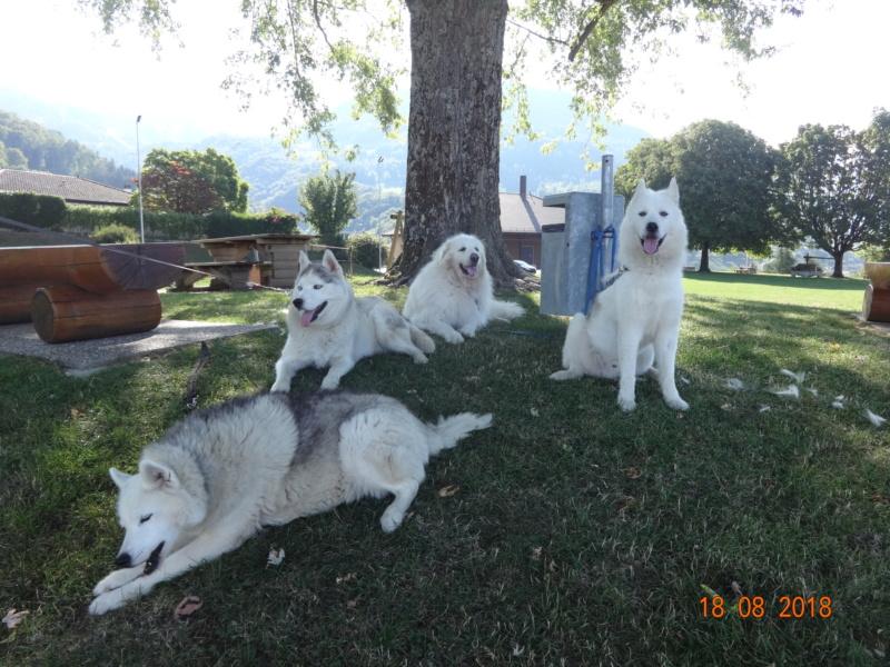 Saskia, Jiro, et leurs copains - Page 4 113