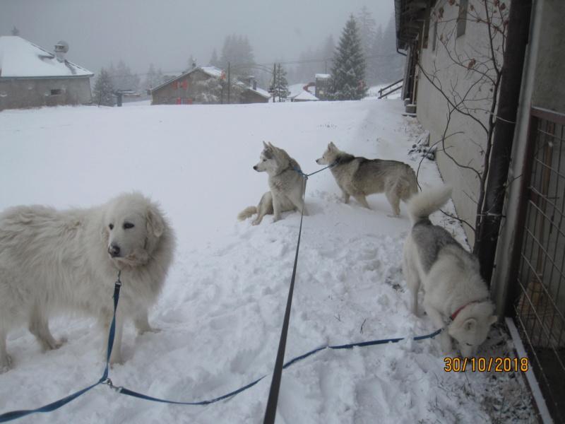 Saskia, Jiro, et leurs copains - Page 4 1_peti10