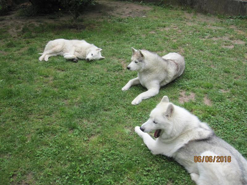 Saskia, Jiro, et leurs copains - Page 4 1_repo10