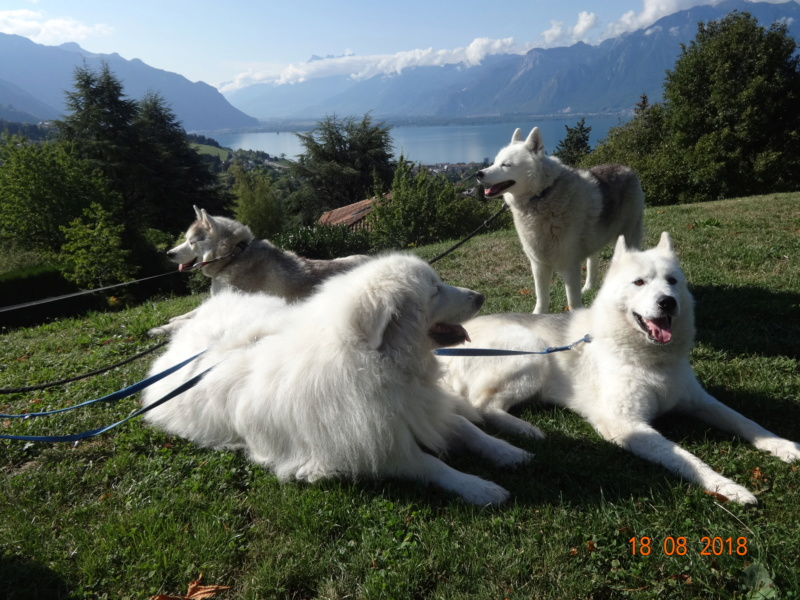 Saskia, Jiro, et leurs copains - Page 4 212