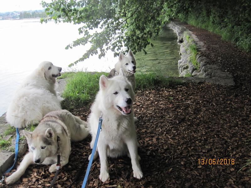 Saskia, Jiro, et leurs copains - Page 4 310