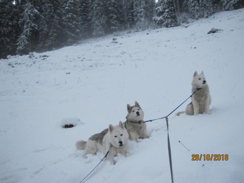 Saskia, Jiro, et leurs copains - Page 4 512