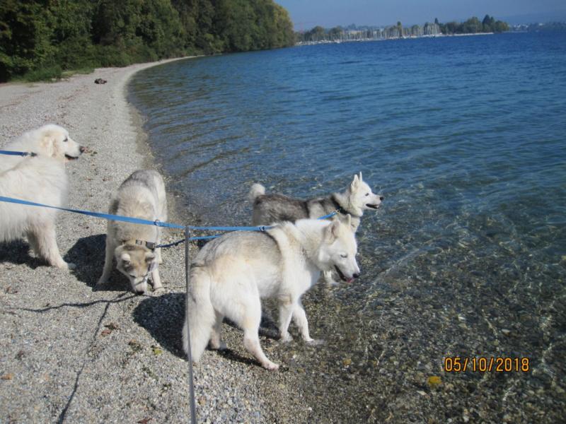 Saskia, Jiro, et leurs copains - Page 4 712