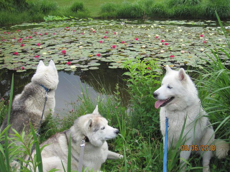 Saskia, Jiro, et leurs copains - Page 4 Eitang10