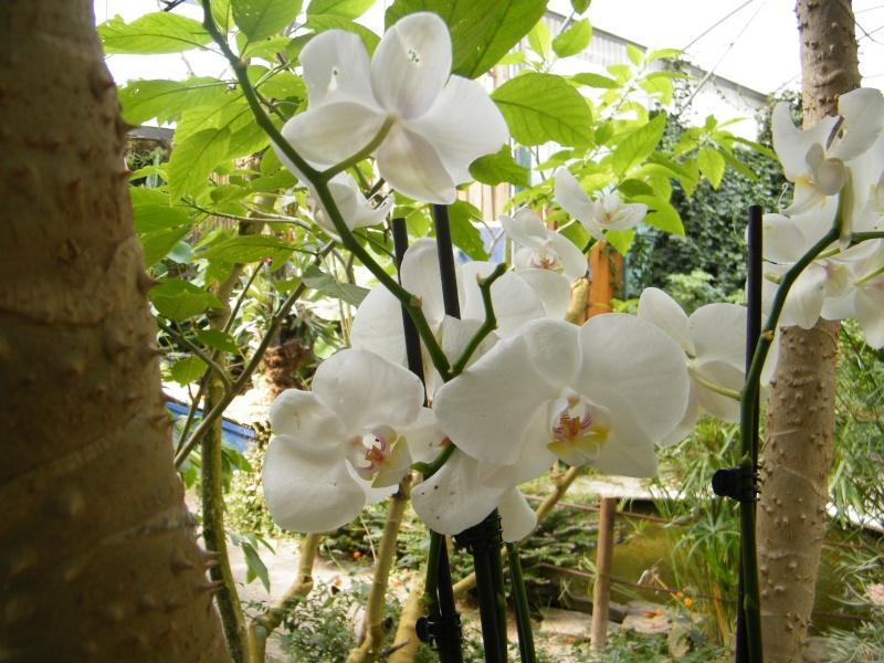 orchidées : questions, problèmes et conseils de culture Sept2040