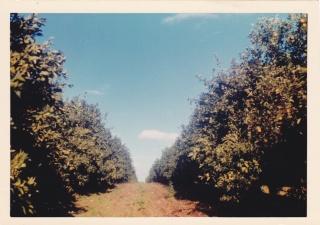 Fermes Agricoles, Viticoles, Région de Meknès Img19