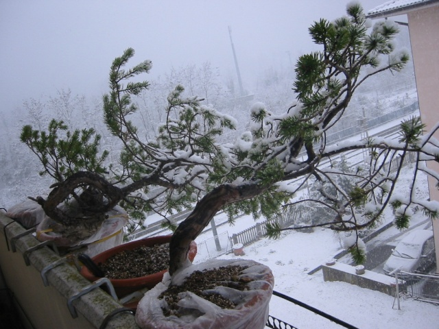 Bonsai sotto la neve 109-0922