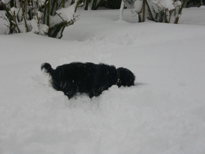 Par un blanc 19 décembre 2010 ! 19_dac11