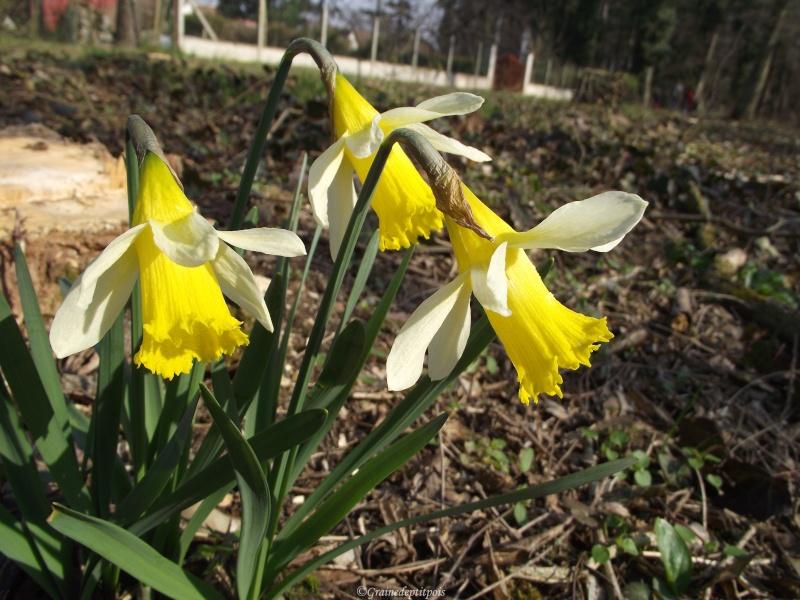 4 mars 2011 Jonqui10