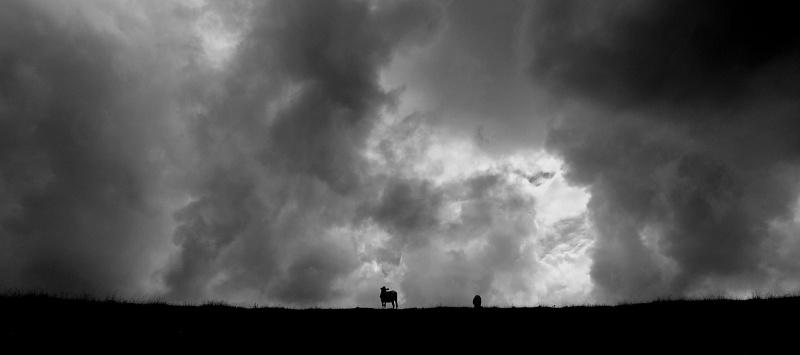Un orage se prépare ! P7309310