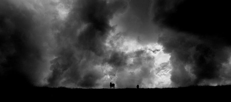 Un orage se prépare ! P7309311
