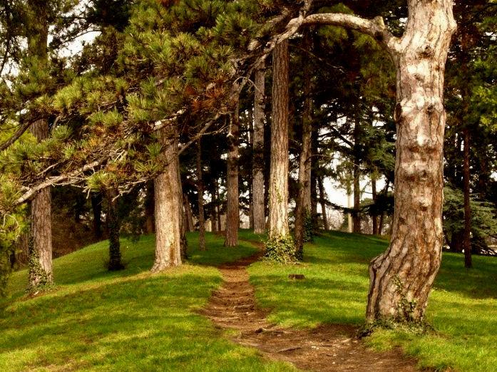 petit sentier forestier Parc_d10