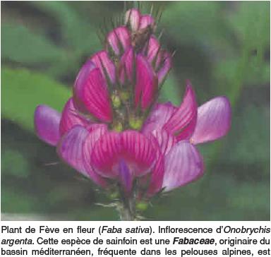Livre - Cadeaux aux forestiers !!!??  - Page 2 Captu10