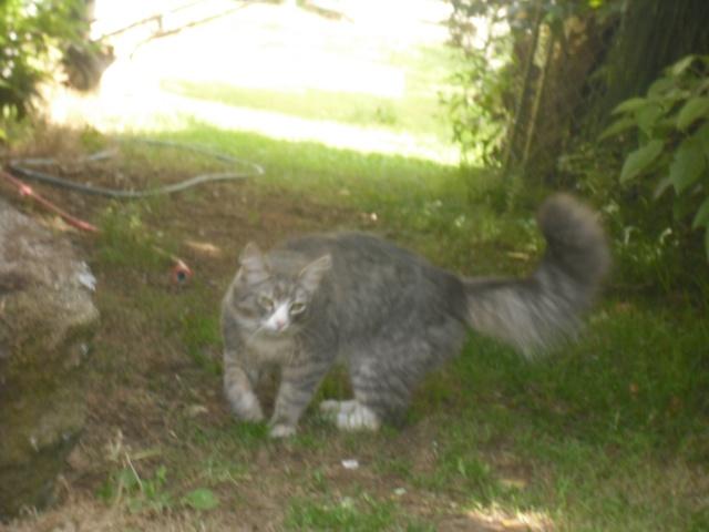 {Seller} Free cat :3 Dscf2410