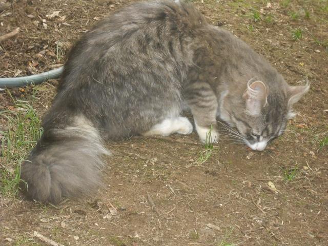 {Seller} Free cat :3 Dscf2510