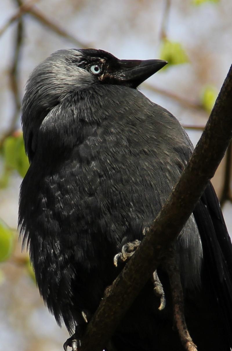 oiseau Img_0115