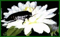 Все о тараканах Mdmt2810